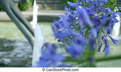 Purple flowers on a background of a fountain