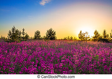 purple flowers on a meadow at sunrise