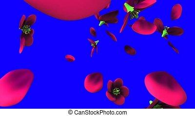 Purple flowers on blue chroma key. Loop able 3D render ...