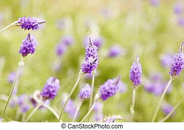 Purple flowers on the grasses