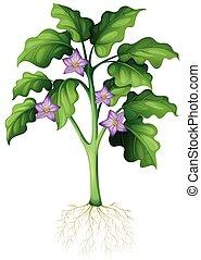 Purple flowers on the plant