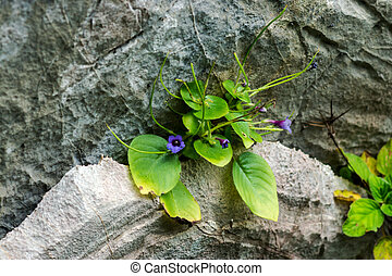 purple flowers on the rock