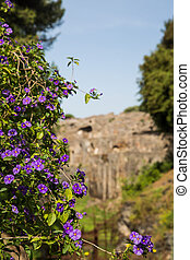 Purple Flowers on Vines in Pompeii