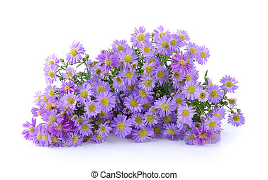 Purple flowers on white background