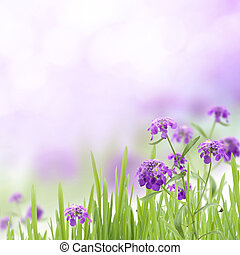 Purple flowers in the green grass on a celestial background