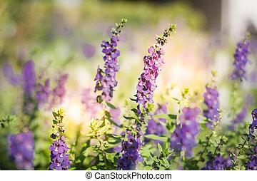 Purple flowers under the sun