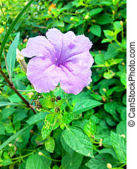 purple flowers with green leaves in the garden