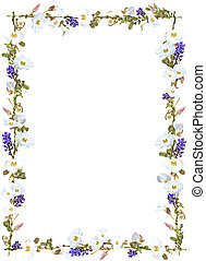 Purple ginger and white sky flower vine border isolated on ...