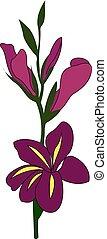 Purple gladiolus, illustration, vector on white background.