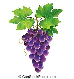 Purple grape on white background - Bunch of purple grape...