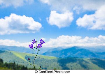 Purple Harebell flower against a backdrop of the Pyrenees