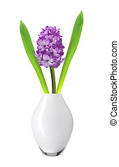 Purple hyacinth in vase isolated on white background