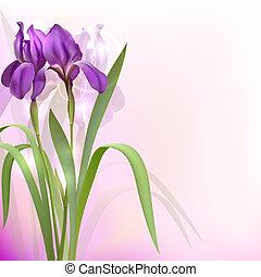 Purple Iris Flowers on bokeh background. Vector illustration