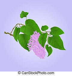 Purple Lilac branch with flowers and leaves vector