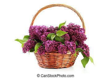 Purple lilac flowers in basket isolated on white