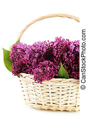Purple lilac flowers in basket on white background