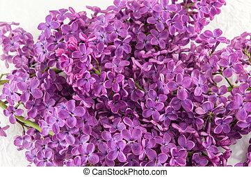 Purple lilac flowers on white textile