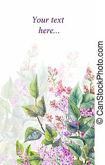 Purple lilac on a white background. Vector watercolor illustration