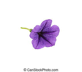 purple little flower on a white background