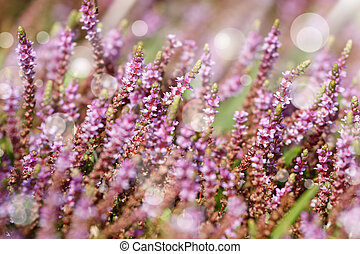 Purple little flowers in green grass background