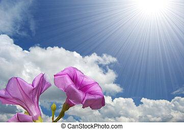 purple morning glory flower against blue sky