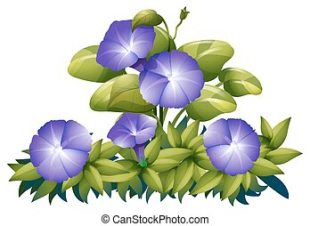 Purple morning glory in the bush illustration