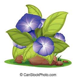 Purple morning glory in the garden illustration