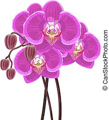 Purple orchid branch on white background.