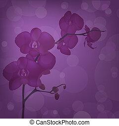 Purple Orchid Branch, Vector Illustration