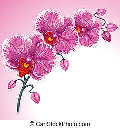 Purple orchid - Excellent background with realistic vector...