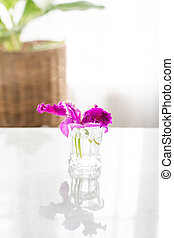 Purple orchid flower in glass on the table.
