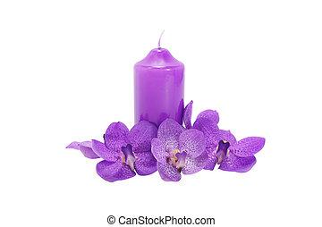 Purple Orchid flower.