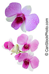 purple orchid flower with fresh wat