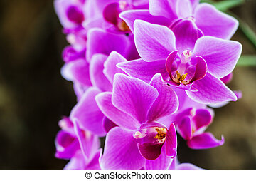 Purple orchid flowers in garden