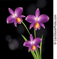Purple orchid flowers with black background