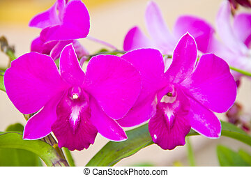 purple orchid in a garden