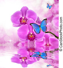 purple orchid - Beautiful purple orchid with butterflies...