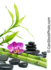 purple orchid with bamboo and black