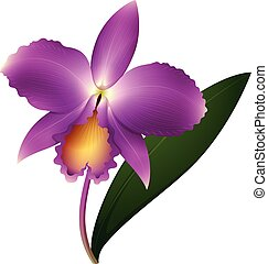 Purple orchid with green leaf