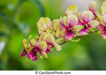 Purple orchids in the garden