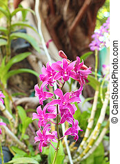 Purple orchids in the nature