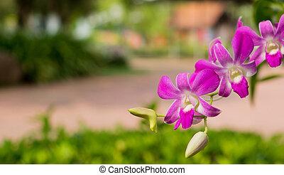 Purple orchids on tree