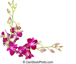 Two branch of purple orchid isolated on white background