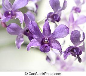 Purple Orhid Flowers