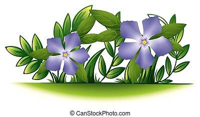 Purple periwinkle flowers in the green bush illustration