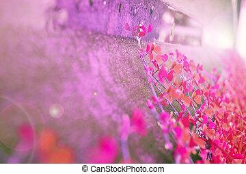 Purple pink grass