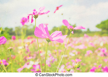 Purple, pink, red, cosmos flowers in the garden with sky clouds background in pastel retro vintage style.soft focus.