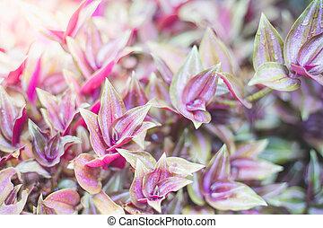 purple plant