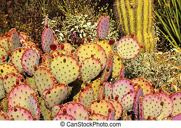 Purple Prickly Pear Cactus Opuntia Santa-Rita Desert...