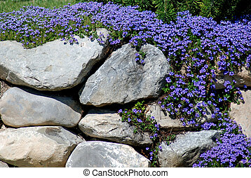 Purple Rock Garden - Purple flowers in a rock garden.